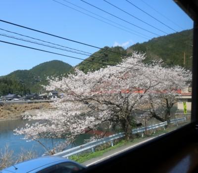 【鉄道撮影紀行】「SL人吉」 ~SLに乗って桜を満喫~